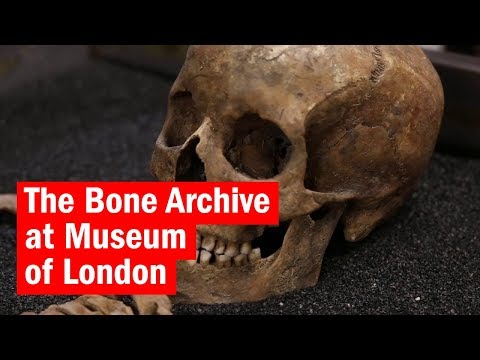 The Bone Archive at Museum of London | City Secrets | Time Out London