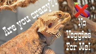 HOW TO  // Get your Beardie To Eat Veggies!!