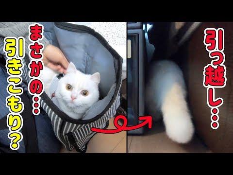 【引越し1日目】新しい家が怖くて狭い隙間に引きこもってしまう猫