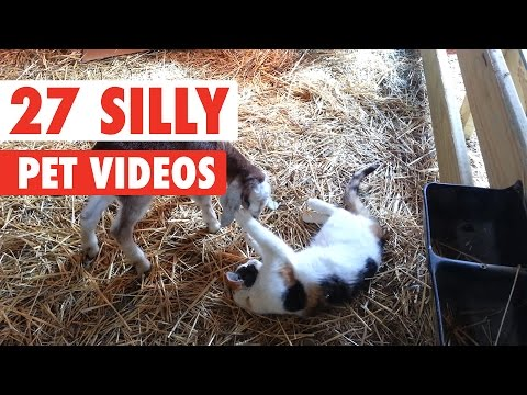 27 Silly Pet Videos Compilation 2016