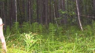 Магический лес. Программа исполнения желаний