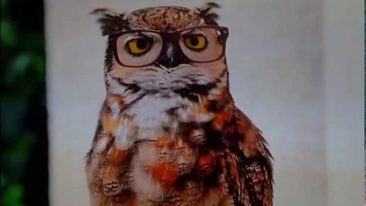America's Best glasses owl commercial - YouTube