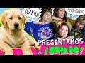 Un Día con JAMIE, ¿NUESTRA NUEVA MASCOTA? ?? ?? Paseo, Baño y Juegos con PERRITA Golden Labrador