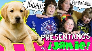 Un Día con JAMIE, ¿NUESTRA NUEVA MASCOTA? 🐶 😍 Paseo, Baño y Juegos con PERRITA Golden Labrador thumbnail