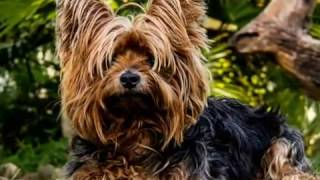 Видео про собак! Відео про собак! Videos about dogs!