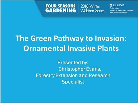 Four Seasons Gardening Series - The Green Pathway to Invasion:  Ornamental Invasive Plants