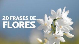 20 Frases de Flores 🌸 | Belleza natural e inspiradora