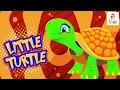 Little Turtle song |Kids Songs and Nursery Rhymes | Nursery Rhymes with Lyrics | Baby Songs