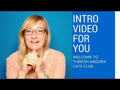 Introduction to Turkish Angora Cats Club