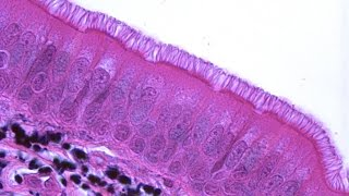 2. Ткани (8 класс) - биология, подготовка к ЕГЭ и ОГЭ 2017