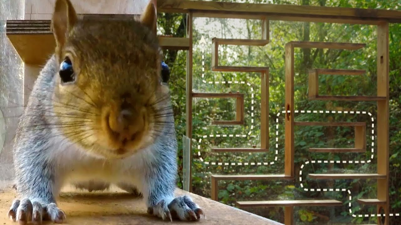Can Squirrels Solve Mazes? | Earth Unplugged