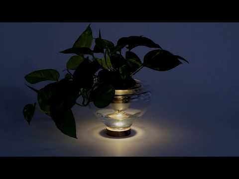 Plant Your Light - Do It Yourself