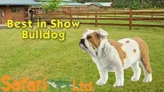 Safari LTD Best in Show Bulldog