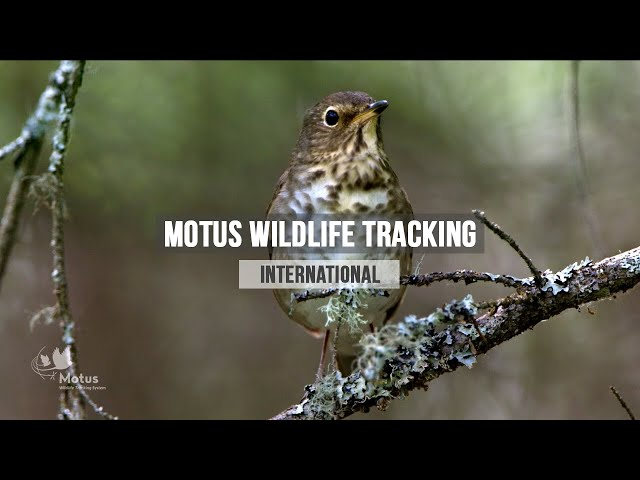 Bird Research in Canada: Motus Wildlife Tracking System