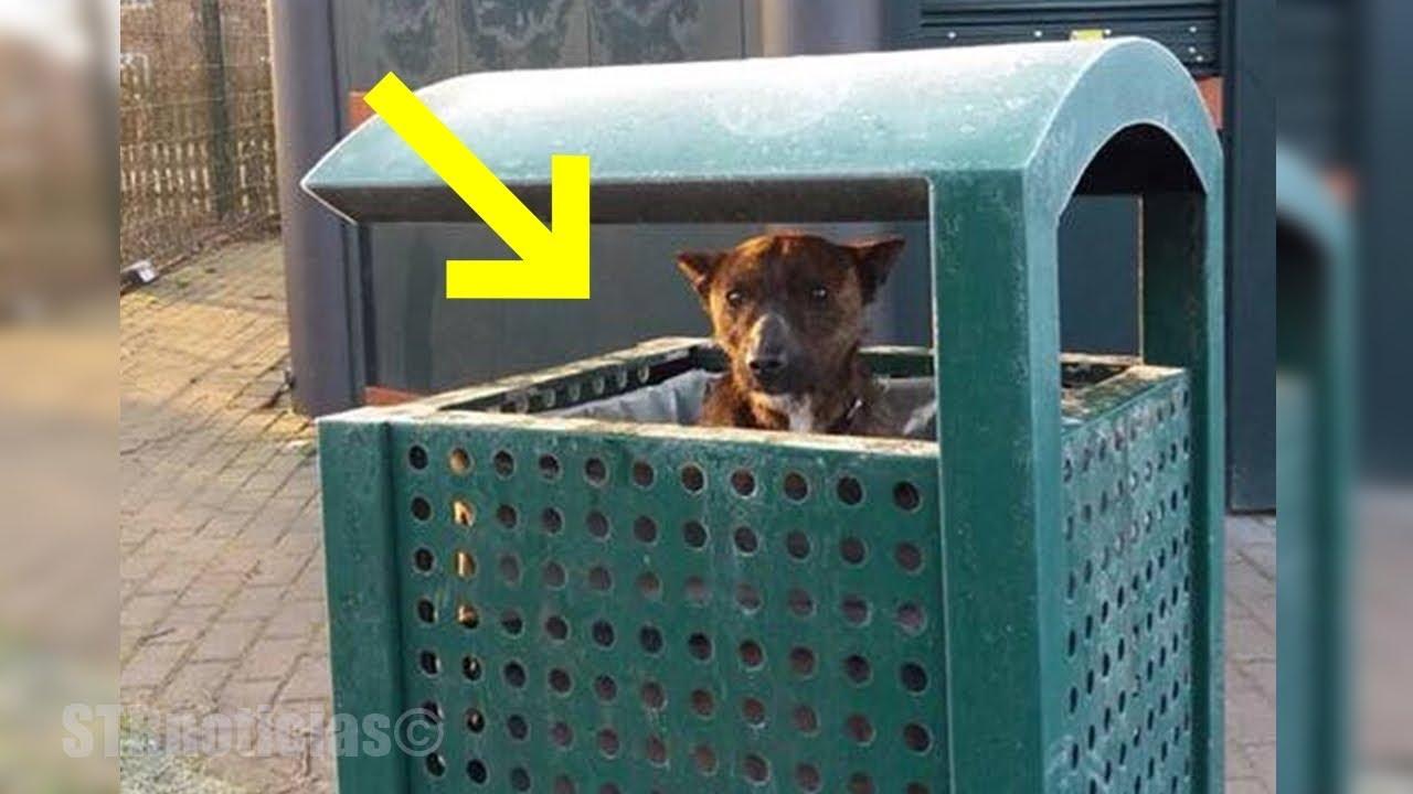 encuentran-un-perro-en-la-basura-luego-su-rescatador-se-acerca-para-descubrir-lo-ms-desgarrador