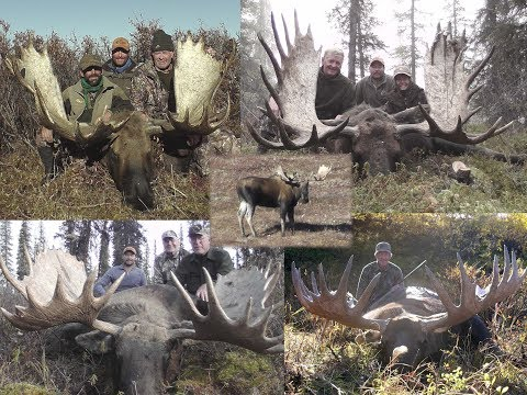 Alaska Yukon Moose Hunting See 7 Big Alaskan Bull Moose Taken By Hunters