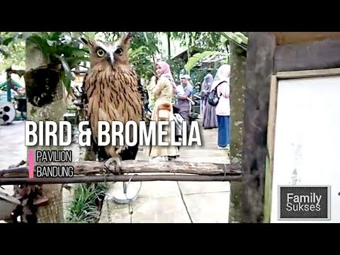 bird-and-bromelia-pavilion-bandung--hd
