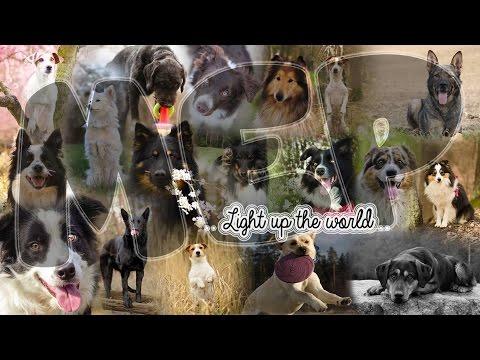 Light up the world ♥ [Full Dog Mep] HD