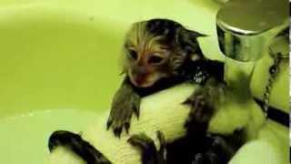 生後4か月のコジロウ コモンマーモセット marmoset
