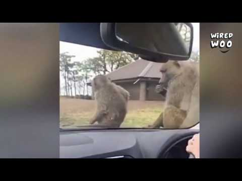 Dangerous Safari Park Video! You Should Not Take Your New Car To A Safari Park!
