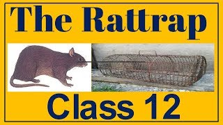 The Rattrap, Class-12 (Explained In Hindi)