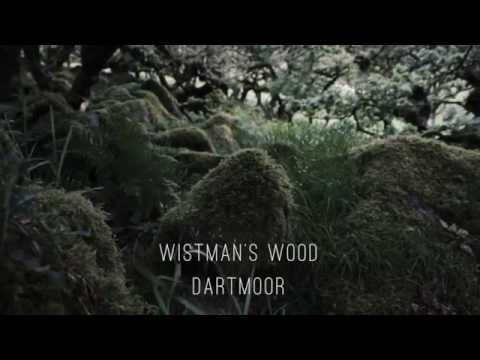 Moments / Wistman's Wood
