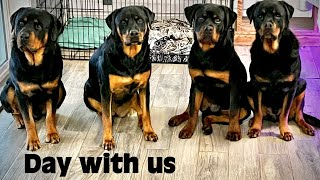 A Day in the Life owning a Rottweiler! Complete Guide to our day.
