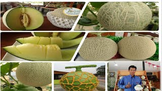 First Melon Farm Pattaya