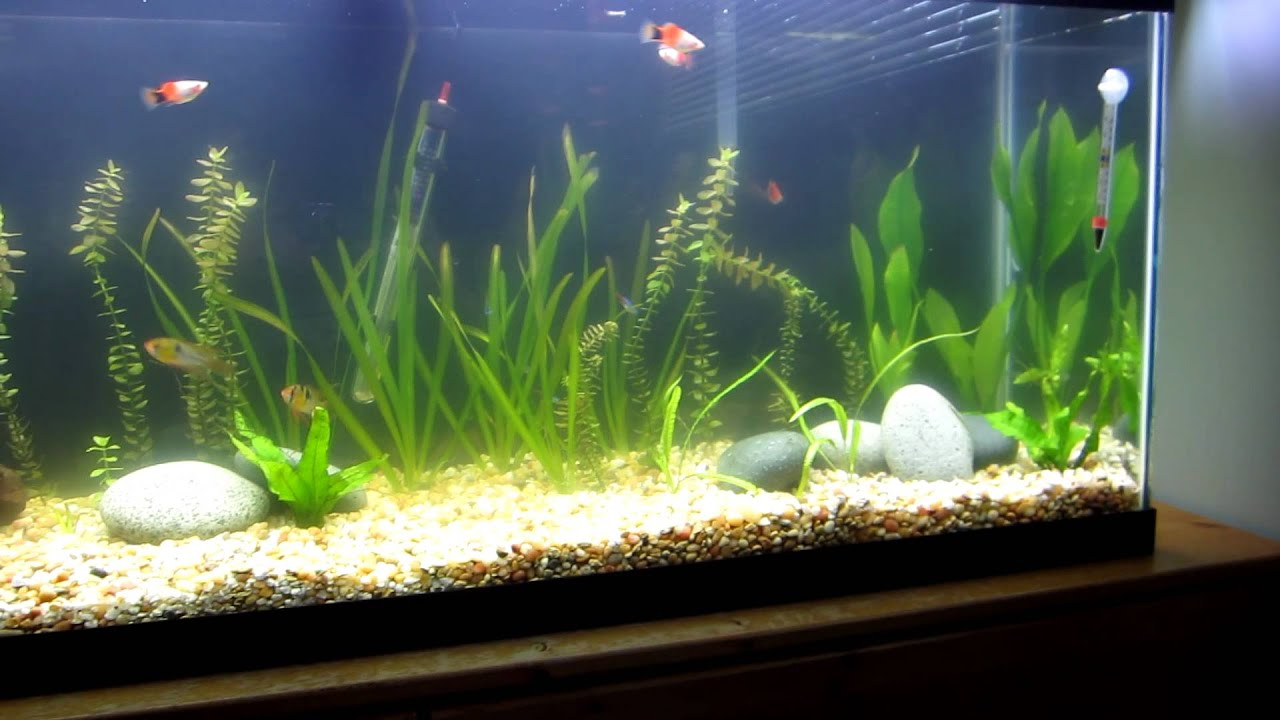 50 Gallon Planted  New Substrate And Aquascape