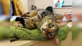 Смешные видео с животными Смешные кошки и коты июнь 2019 новые приколы с котами funny cats 82