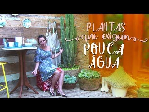 Jardim com plantas que exigem pouca água (sol forte)