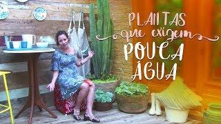 Jardim com plantas que exigem pouca água