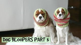 Dog Bloopers | Herky & Milton Outtakes Part 3 | Cavalier King Charles Spaniel