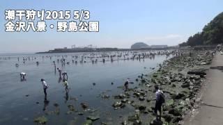 2015 5/2-3の金沢八景 野島公園の 潮干狩りを撮影してきました! □twitt...