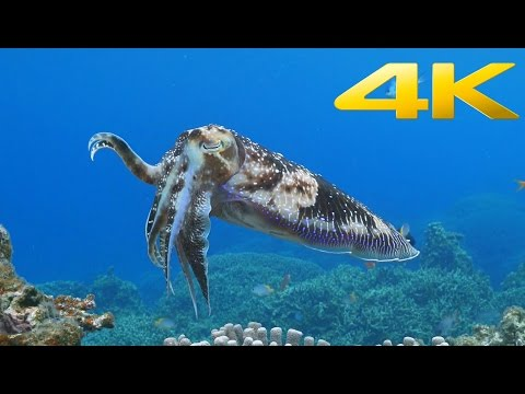 An excellent Sony 4K video of sea life hosted on YouTube.