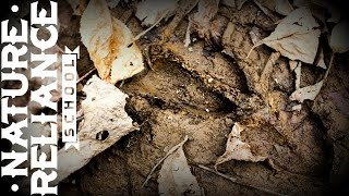 Professional Tracking Insight for Deer Hunters
