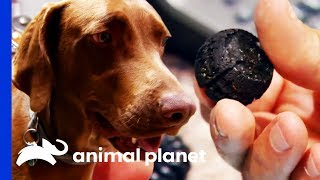 Ball Bearings Have Been In Dog's Stomach For 3 YEARS! | Dr. Jeff: Rocky Mountain Vet