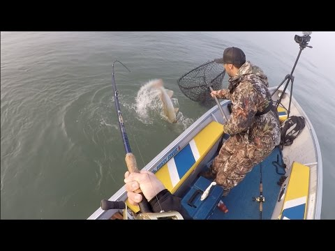 Jigging For Monster Fall Musky – 8 Fish, 1 Day!
