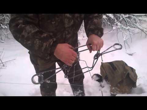 Ловля бобра проходным капканом форум