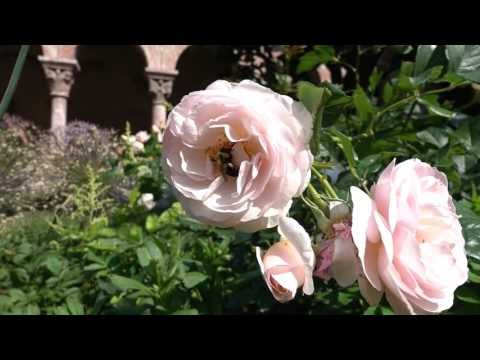 Guided Tour: Gardens of The Met Cloisters