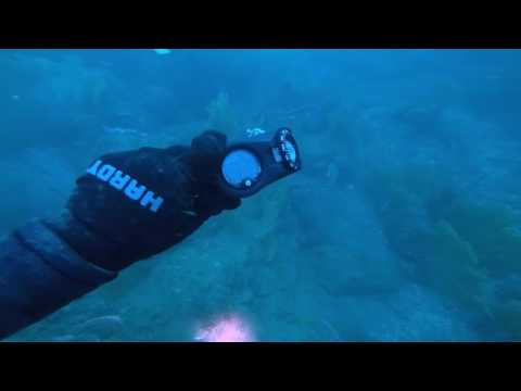 Jan 31, 2017 Bug dive in the Santa Monica Bay.
