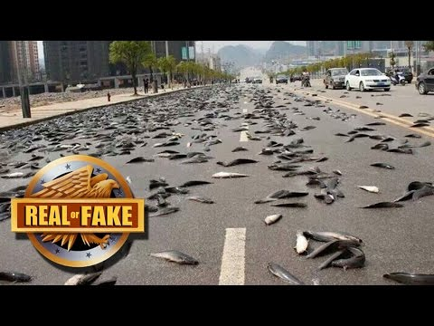 Fish Rain Down From The Sky - Real Or Fake?