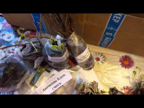 Саженцы почтой  от магазина Beeker, как они выглядят.