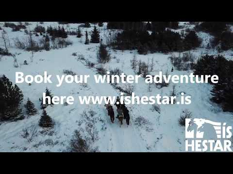 Winter horseback riding with Ishestar near Reykjavik