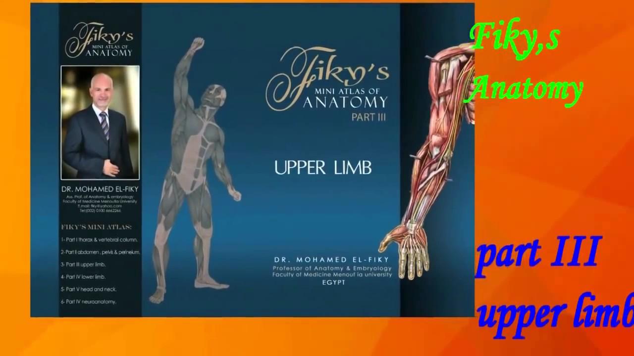 Mod 4 - MS - Practical Anatomy - Dr Elfiky - Upper Limb Bones - YouTube