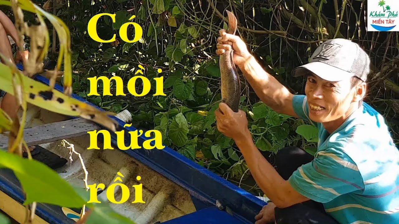 161 | Thăm lú bắt cá lóc về nấu cháo | Fishing