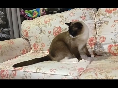 'Cats Chasing Their Own Tails Compilation'    CFS