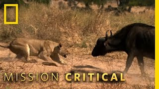 Animals of the Year - Top 3 Moments | Mission Critical