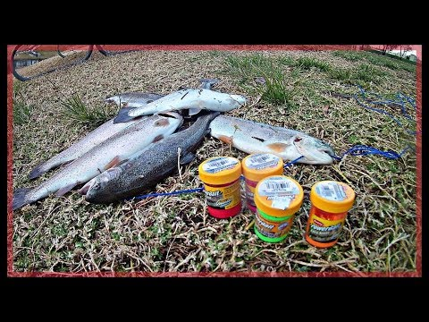 How To Catch Trout With Powerbait (santee Lakes)