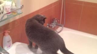 Кошка любуется на себя в зеркало